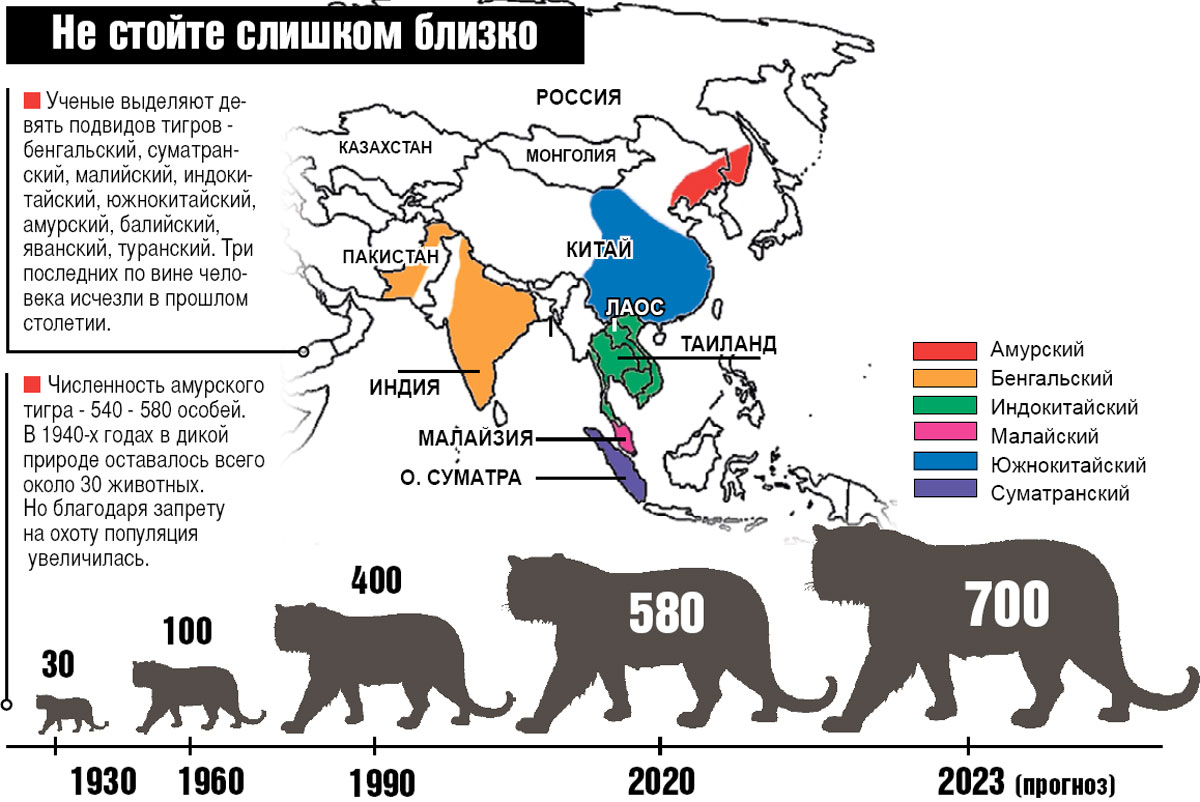 Ученые выделяют девять подвидов тигров — бенгальский, суматранский, малийский, индокитайский, южнокитайский, амурский, балийский, яванский, туранский