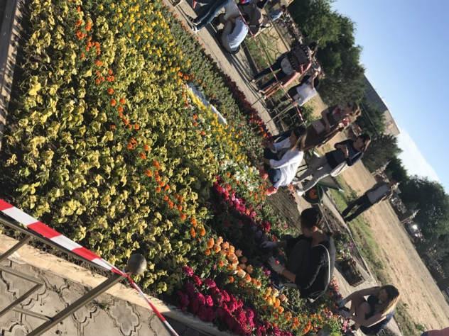 К сакральному цветку в республике особое отношение - лотос размещен даже на флаге региона