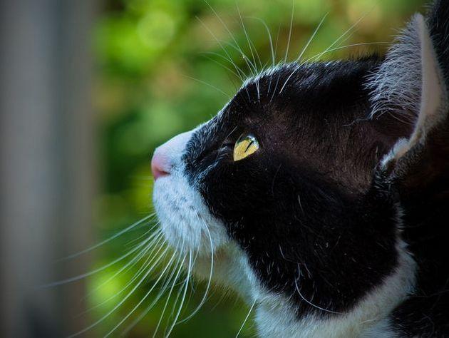 Электрики обесточили 250 домов для спасения кота