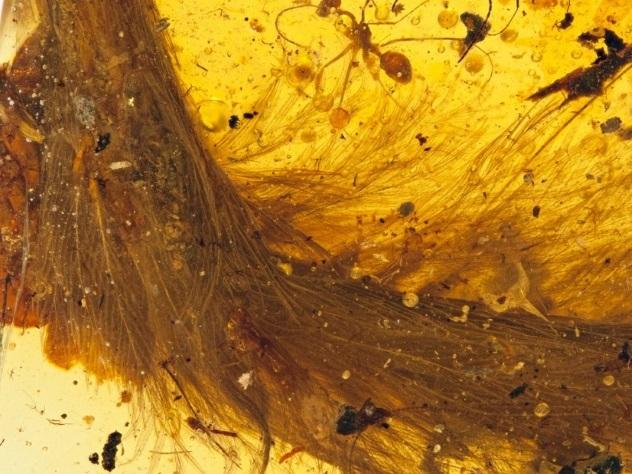 Чудо в перьях. Ученые нашли окаменелость, меняющую представление о динозаврах
