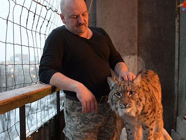 Живущая на балконе рысь запугала жильцов московской многоэтажки