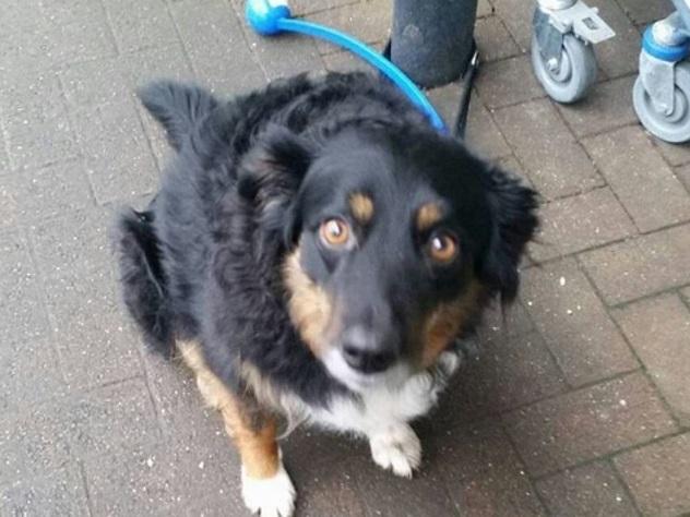 Снимки грустных псов на поводках растрогали пользователей Сети