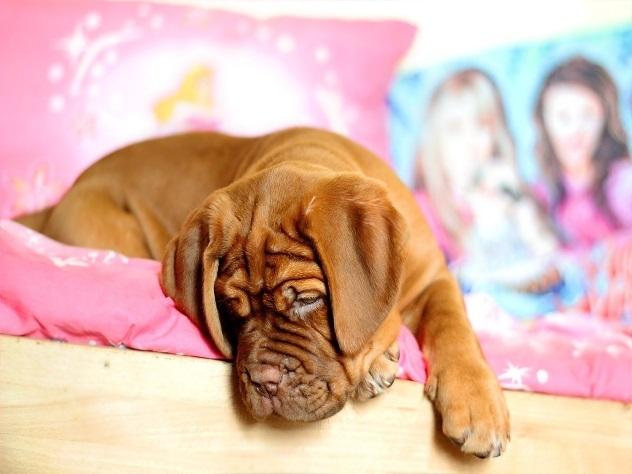 В московских квартирах могут запретить держать крупных собак