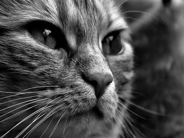 Амурчанин продал кота-экстрасенса за 5 миллионов рублей