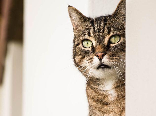 ЦРУ потратило 20 млн долларов на создание кота-шпиона