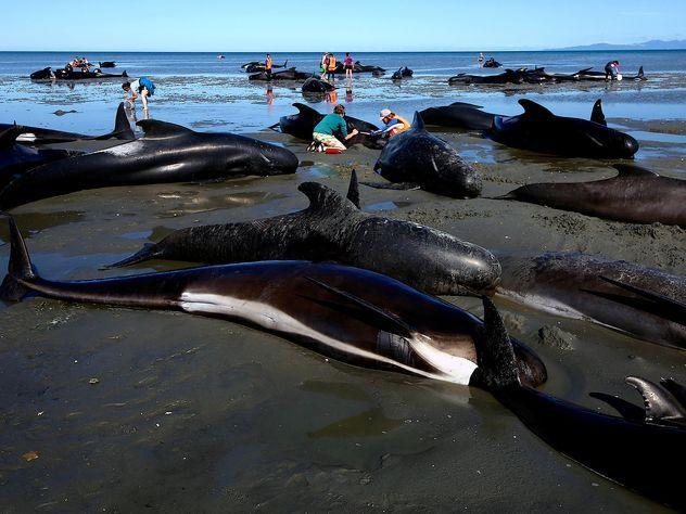 Ученые: самоубийство дельфинов может быть предвестником землетрясения
