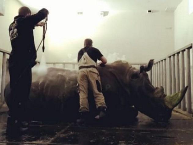 Принимающий душ цирковой носорог прославился в Сети