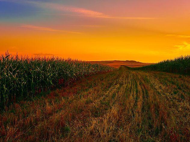 Ученые: голод грозит Земле уже в ближайшее десятилетие