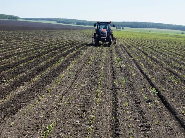 Россия и Алжир могут стать портнерами в промышленности и сельском хозяйстве