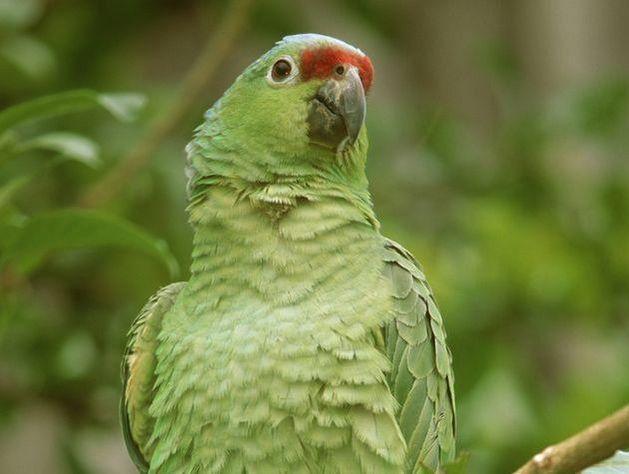 Ваэропорту наострове Тайвань погибли неменее одной тысячи попугаев