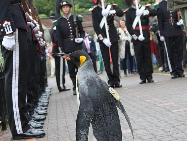 Пингвин из Шотландии дослужился до генерала