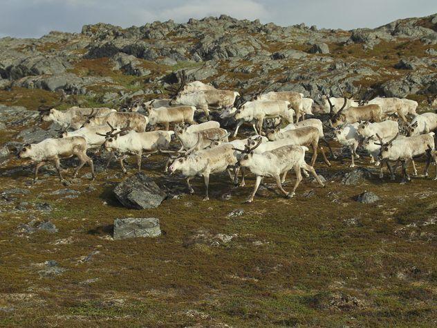 Из-за молнии вНорвегии погибли 323 оленя