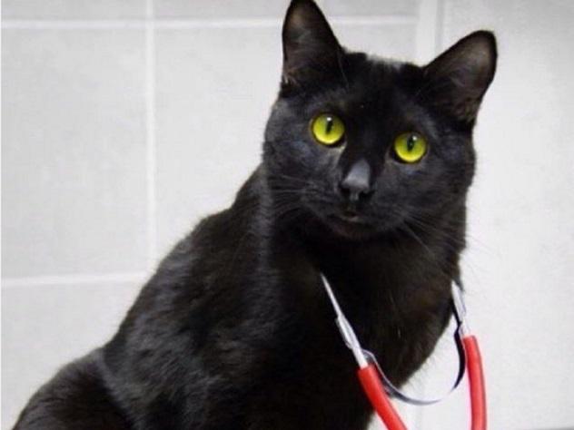 Черный кот-инвалид помогает своим собратьям по несчастью