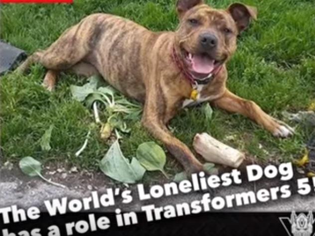 Самая одинокая собака в мире стала кинозвездой
