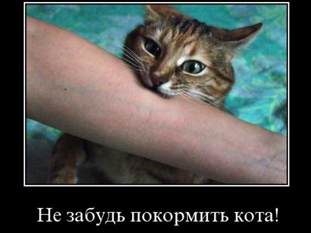 Кузбассовца будут судить закормление кошки вчужом доме