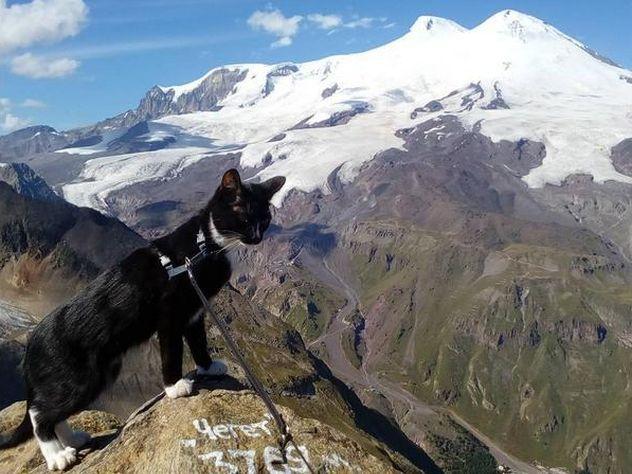 Мужчина два месяца дрессировал котенка Графа перед восхождением наЭльбрус
