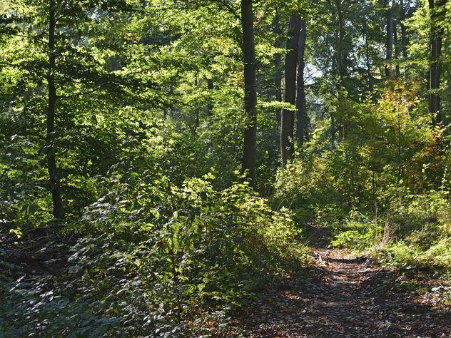 Заблудившиеся пенсионеры-грибники из Подмосковья шли через лес 8 дней