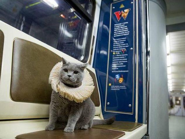 Британский кот «обкатал» новый поезд метро