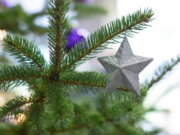 Новогоднюю ель вКремль доставят изИстринского района Подмосковья