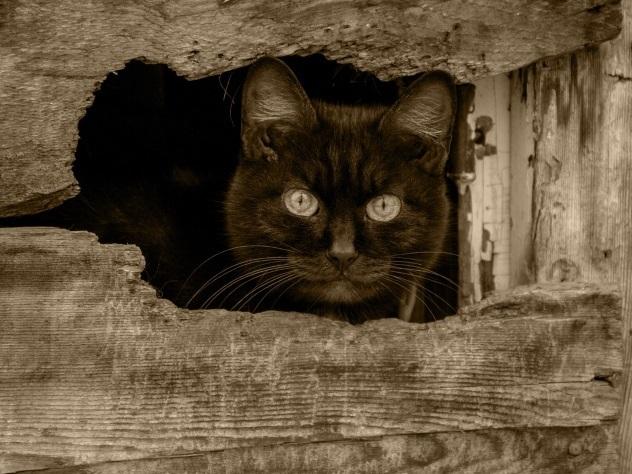 Зоозащитники боятся за судьбу черных котовна Хэллоуин