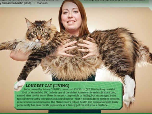 119-сантиметровую домашнюю кошку записали вКнигу рекордов Гиннеса