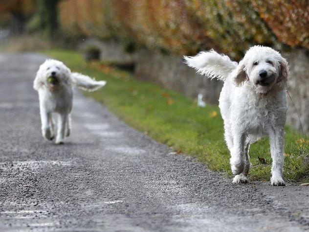 ВПетербурге словили хозяев стаи собак, напавшей на7-летнего ребенка