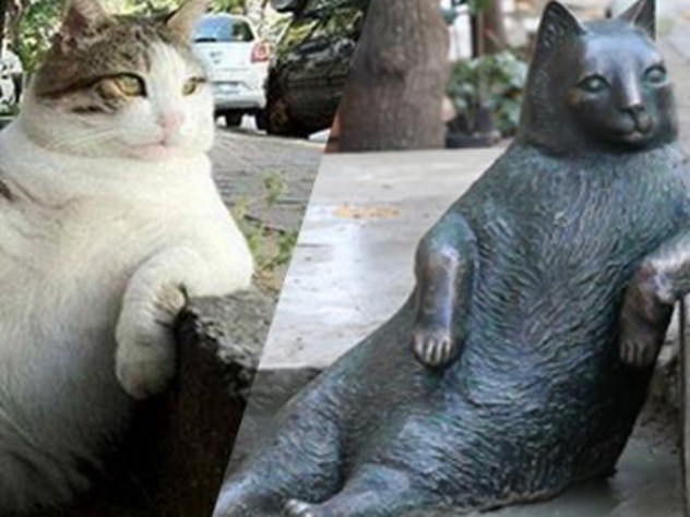 В Турции украли памятник самому знаменитому коту