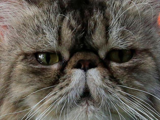 Жительница Барнаула продала машину икупила кошку за млн. руб.