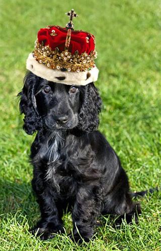 Люпо - королевский щенок!