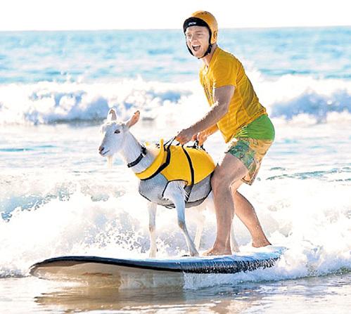 Во время занятий сёрфингом Дэн МАКГРЕГОР завидует четырём ногам своей козы
