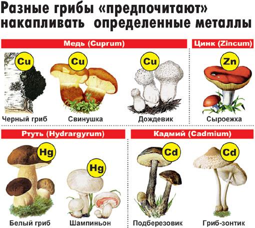 http://eg.ru/upimg/photo/142393.jpg