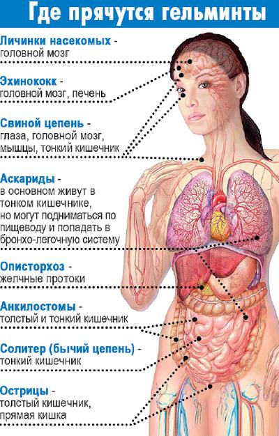 чеснок и паразиты в организме человека