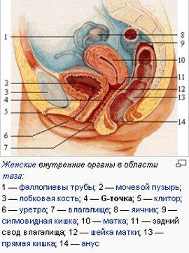 klitor-i-vlagalishe-zhenskie-erogennie-zoni