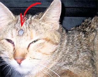 Из черепа Могги виднелась только шляпка гвоздя (фото ua-reporter.com)