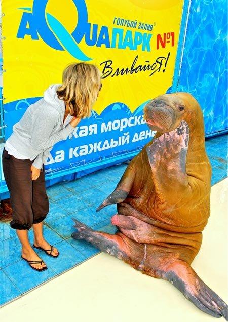 В Ялте Светлане ЛОБОДЕ показали... хрен моржовый