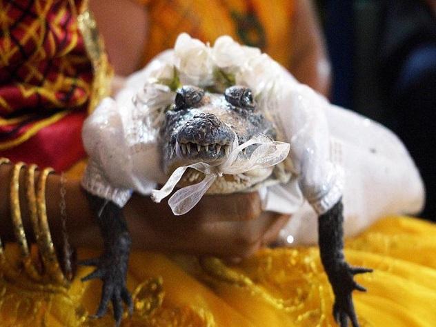 Мэр мексиканского города женился накрокодилице ради счастья городских жителей