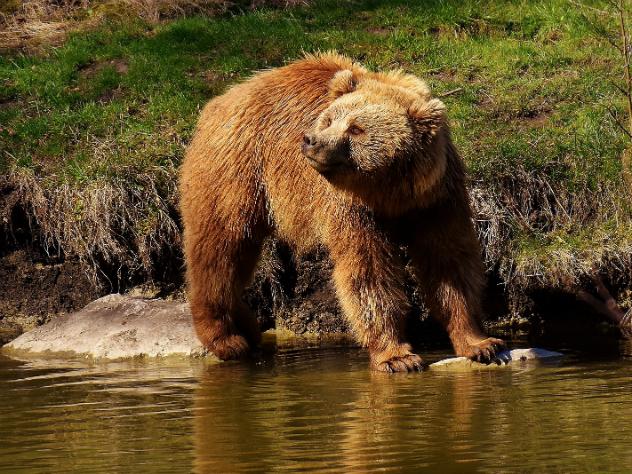 11-летний мальчик на Аляске спас родственников от разъяренного медведя