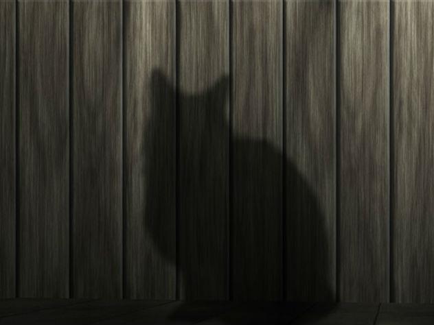 В Омске сорок кошек обглодали скончавшегося хозяина