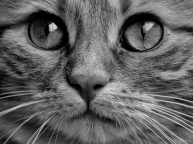 Чем на самом деле прославился Шрёдингер и его кот