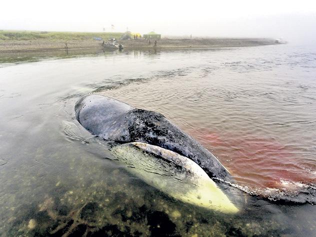 Какие морские обитатели на грани вымирания