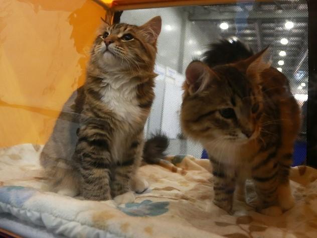 челябинские веганы закрыли котов машине