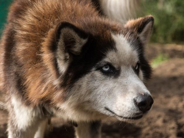 Годовалый ребенок попал в реанимацию после нападения пса зоозащитницы