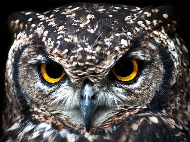 В Петербурге спасли двух хищных птиц, включенных в Красную Книгу