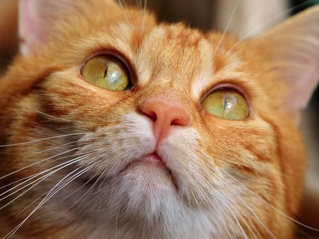 убившего кота стиральной машине осудили коми