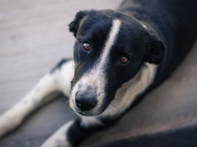 В Мурманске разгромили приют для бездомных собак