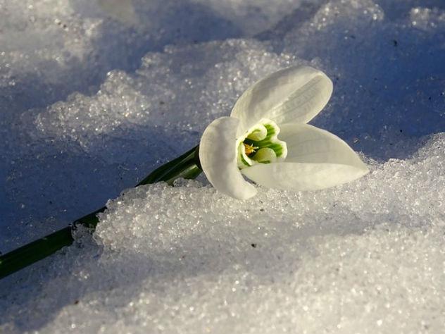 Синоптики назвали дату прихода весны в Москву