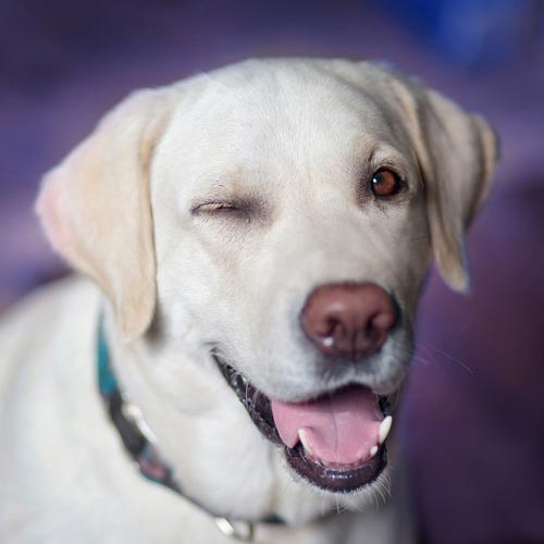 Собака. Источник: .com