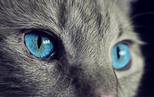 Кот. Источник: .com