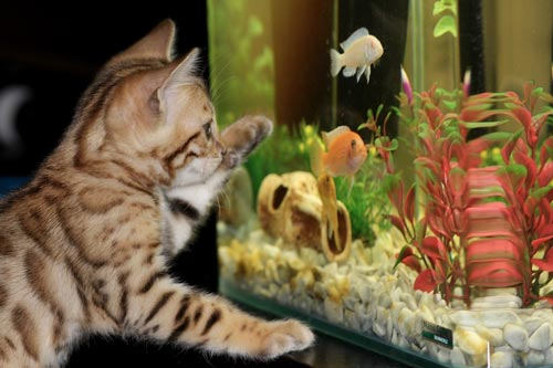 Кот и рыбки. Источник: .com