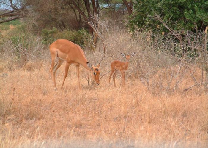 Дикая природа Кении привлекает туристов со всего мира